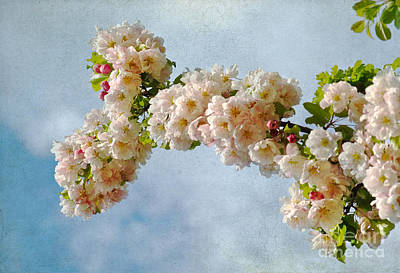 Photograph - Blossoms And Clouds by Gerda Grice