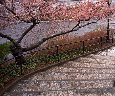 Photograph - Blossoms And Stairs by Cornelis Verwaal