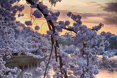 Photograph - Blossoms At Dawn by Leah Palmer
