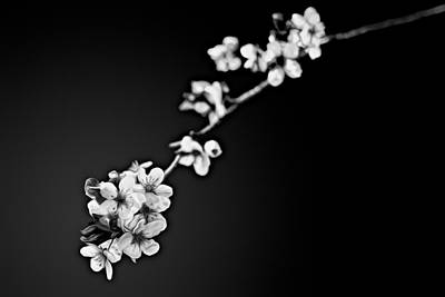 Art Print featuring the photograph Blossoms In Black And White by Joshua Minso
