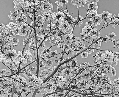 Wall Art - Photograph - Blossoms In Black-and-white by Mary McGrath