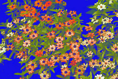 Blossoms In Blue Print by Linda Phelps