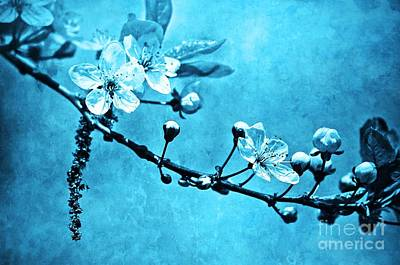 Photograph - Blossoms In Blue by Tara Turner