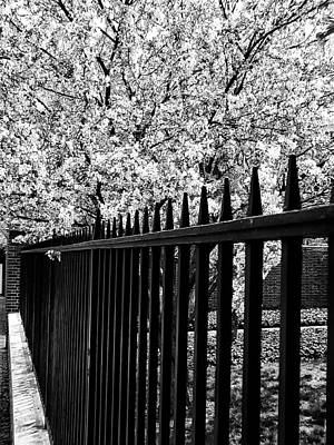 Cherry Blossoms Digital Art - Blossoms In Spring by Bill Cannon