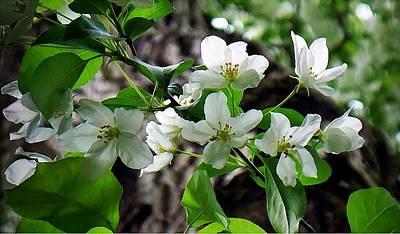 Blossoms Original by Joy Nichols