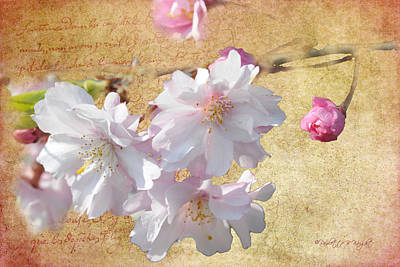 Photograph - Blossoms Of The Heart No Wind Can Touch by Paulette B Wright