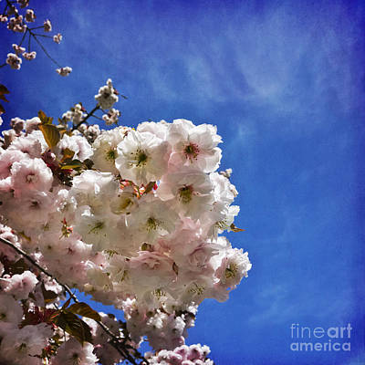 Photograph - Blossom's Reach by Maria Janicki