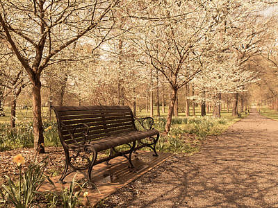 Photograph - Blossoms  by Scott Rackers