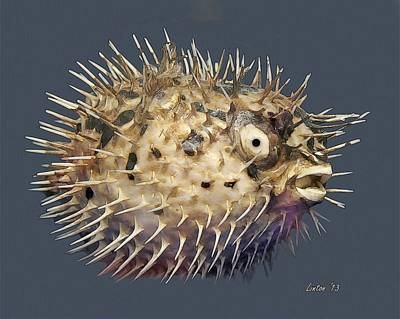 Blowfish Digital Art - Blowfish by Larry Linton