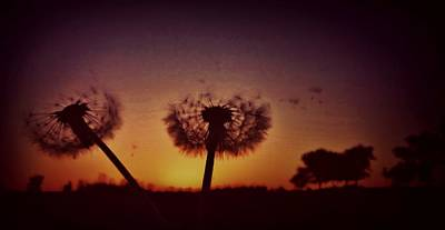 Photograph - Blowing Away by Sarah Pemberton