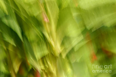 Photograph - Blowing In The Breeze by Paul W Faust -  Impressions of Light