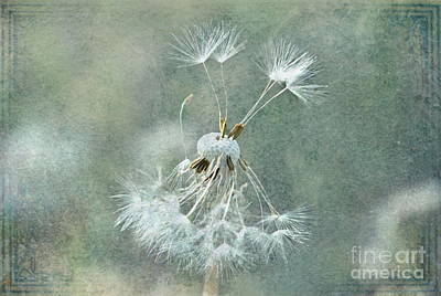 Photograph - Blowing In The Wind by Andrea Kollo