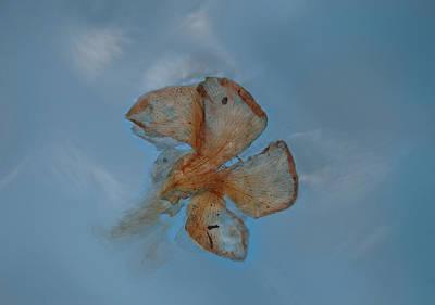 Photograph - Blowin' In The Wind   by Viggo Mortensen