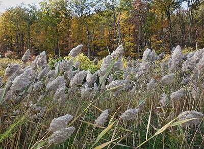 Photograph - Blowing In The Wind by Joan Reese