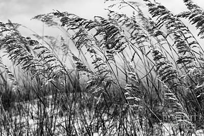 Photograph - Blowing In The Wind Mono by John Rizzuto