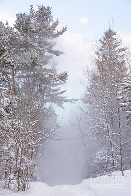 Photograph - Blowing Snow In The Woods by Cheryl Baxter
