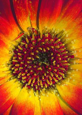 Abstract Hearts Digital Art - Blowzy Daisy Details by Bill Tiepelman