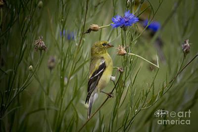 Amen Corner Photograph - Blu by Cris Hayes