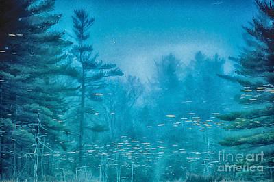 Photograph - Blu by Sue OConnor