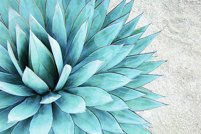Flower Photograph - Blue Agave by Pamela N. Martin