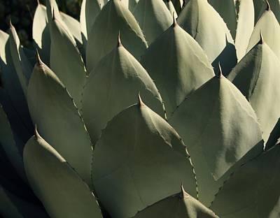 Photograph - Blue Aloe by Ellen Henneke