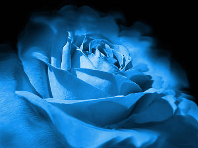 Photograph - Blue And Black Rose Flower by Jennie Marie Schell