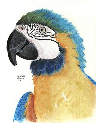 Blue And Gold Macaw Art Print by Heather Gessell