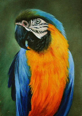 Painting - Blue And Gold Macaw by Lynn Hughes