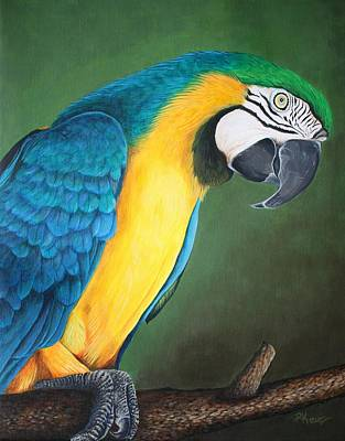 Blue And Gold Macaw Art Print by Pam Kaur