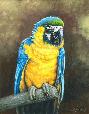 Macaw Painting - Blue And Gold Macaw by Paul Krapf