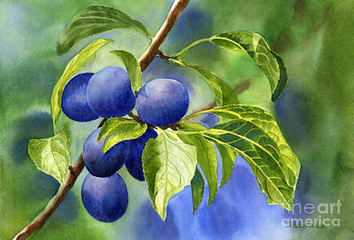 Ripe Painting - Blue And Purple Damson Plums On A Branch by Sharon Freeman