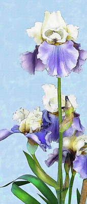 Digital Art - Blue And White Iris by Jane Schnetlage