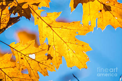 Photograph - Blue And Yellow by Cheryl Baxter