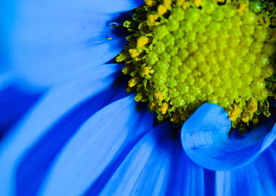 Photograph - Blue And Yellow by Erin Kohlenberg