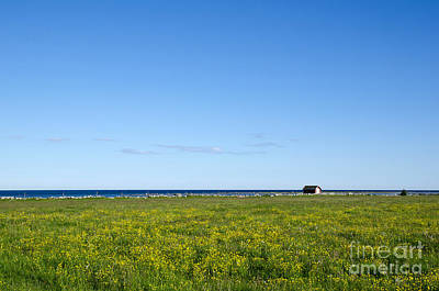 Photograph - Blue And Yellow Landscape by Kennerth and Birgitta Kullman