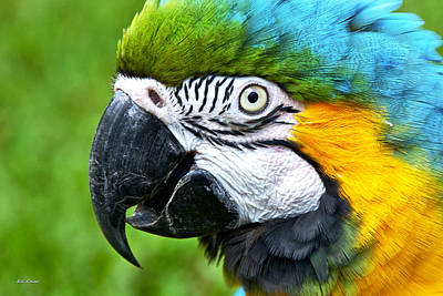 Photograph - Blue And Yellow Macaw by Bibi Rojas