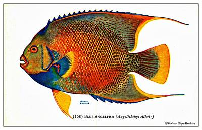 Digital Art - Blue Angelfish 1932 Vintage Postcard by Audreen Gieger