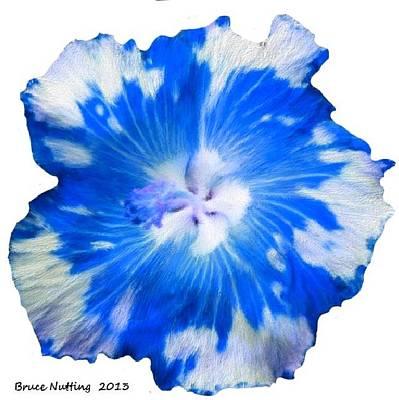 Roaring Red - Blue Appaloosa by Bruce Nutting
