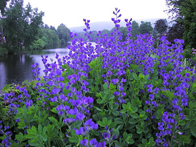 Photograph - Blue At The Bridge Of Flowers by Brian Hoover
