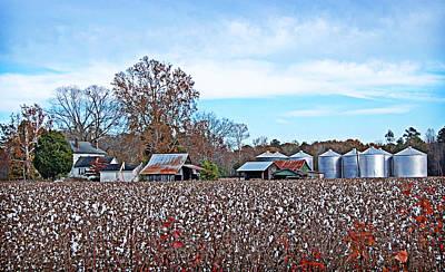 Photograph - Blue Autumn by Linda Brown