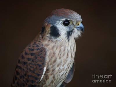 Photograph - Blue Beak by Robin Maria Pedrero