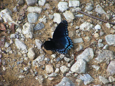 Photograph - Blue Beauty by Melissa Lightner