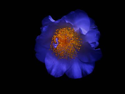 Blue Beauty Art Print