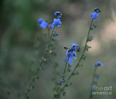 Photograph - Blue Bee by Tamera James