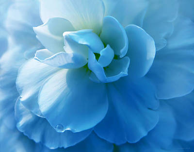 Blue Begonia Flower Art Print