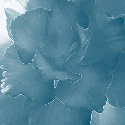 Blue Begonia Original by Jo-Anna Pippen