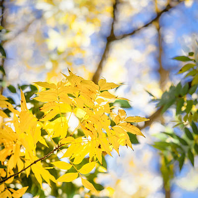 Photograph - Blue Behind Yellow by Melinda Ledsome