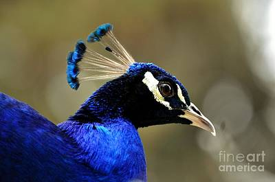 Photograph - Blue Bell by Phillip Garcia