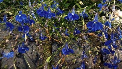 Blue Bells  Print by Diana Burlan