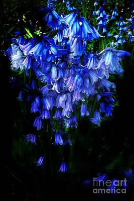 Photograph - Blue Bells by Scott Allison